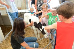 kids petting calf