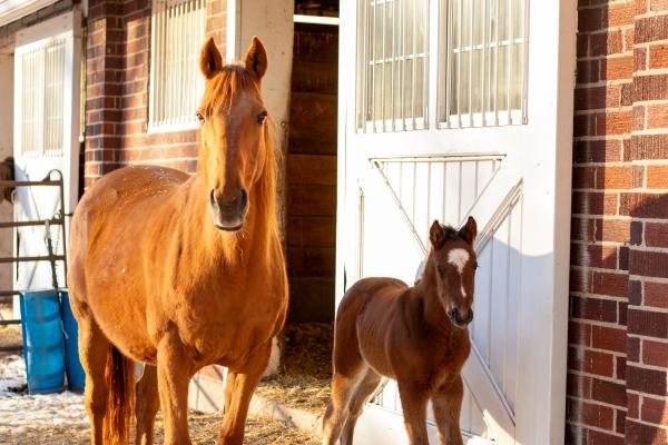 Mare and foal by barn