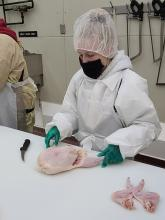 Student cutting chicken meat